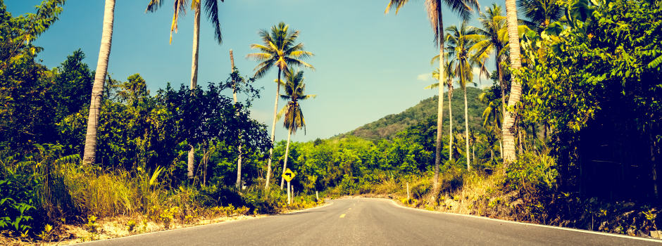 Fahrbahn mit Palmen
